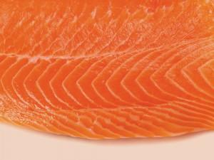 TOBC_salmon